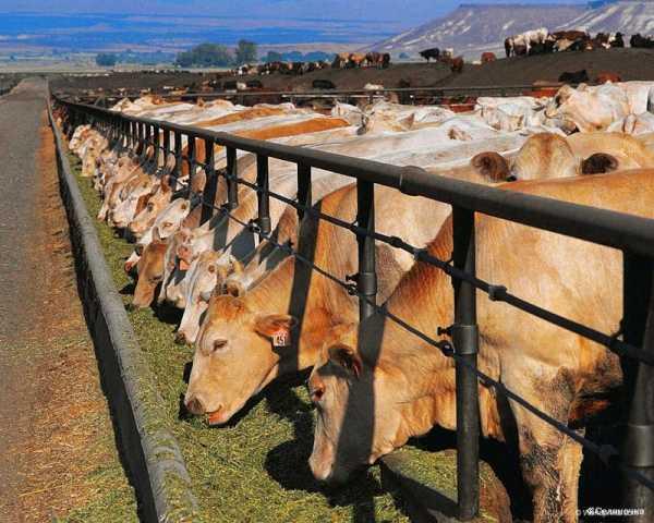 Идеи бизнеса в животноводстве открытие своей консалтинговой фирмы